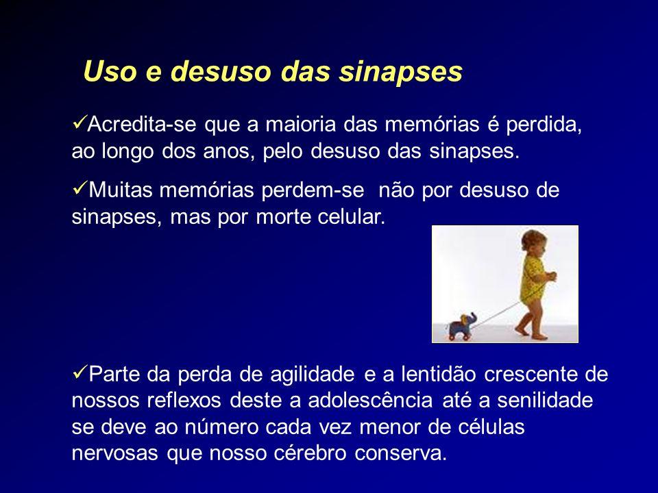 Uso e desuso das sinapses