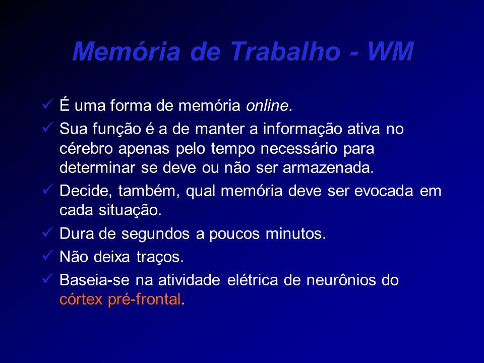 Memória de Trabalho - WM