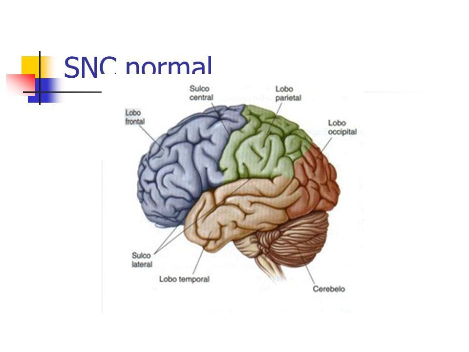 SNC normal