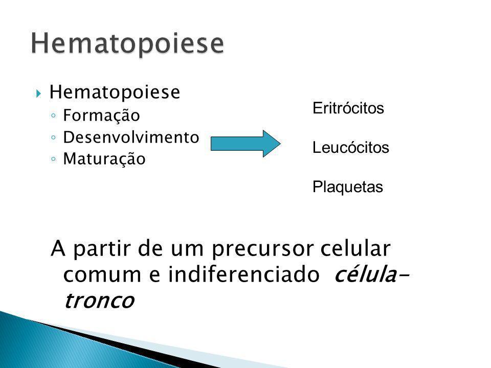 HematopoieseHematopoiese. Formação. Desenvolvimento. Maturação. A partir de um precursor celular comum e indiferenciado célula- tronco.