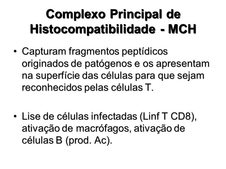 Complexo Principal de Histocompatibilidade - MCH