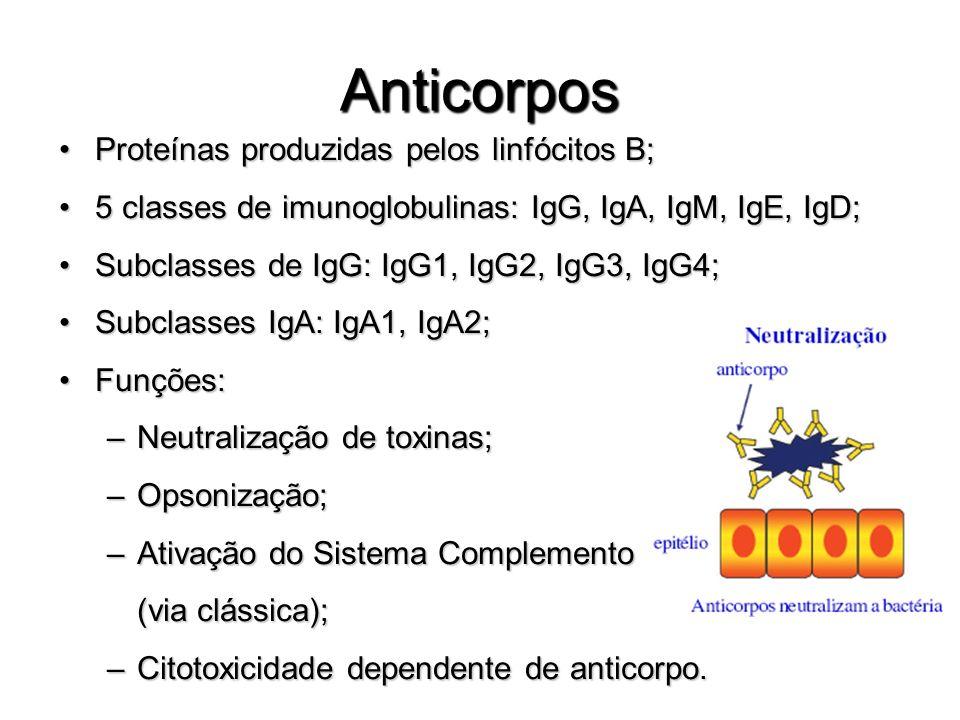 Anticorpos Proteínas produzidas pelos linfócitos B;
