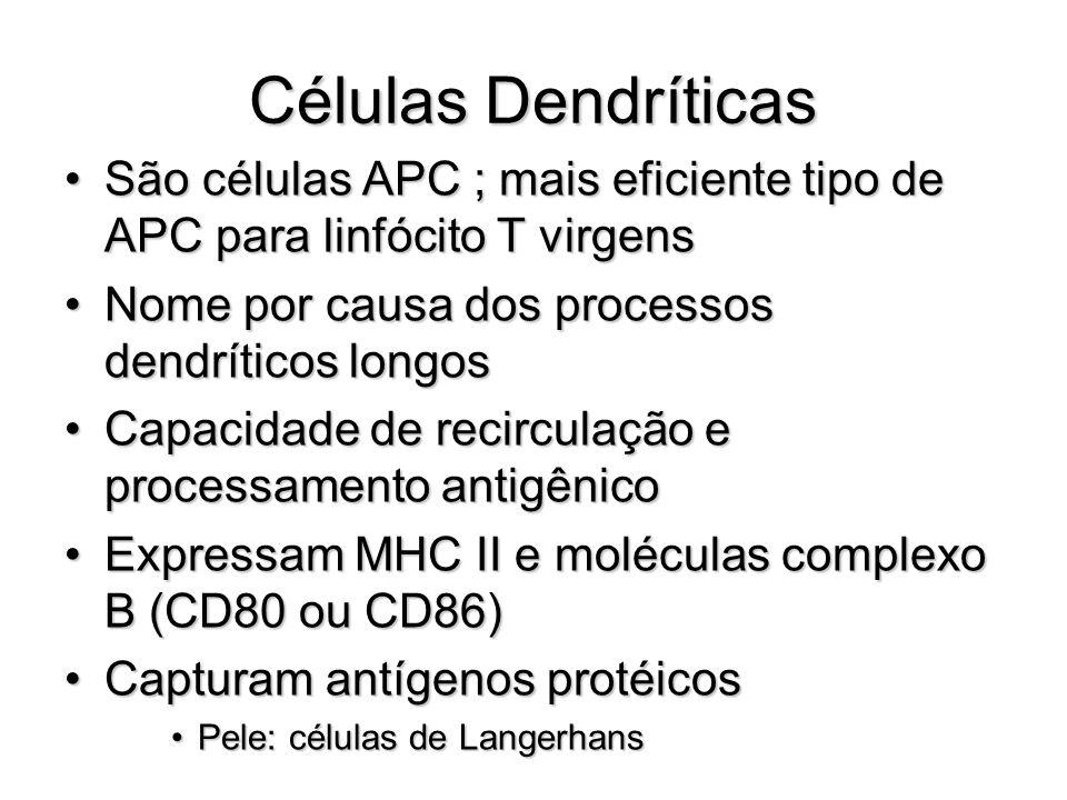 Células Dendríticas São células APC ; mais eficiente tipo de APC para linfócito T virgens. Nome por causa dos processos dendríticos longos.