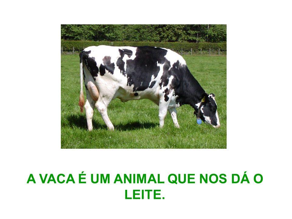 A VACA É UM ANIMAL QUE NOS DÁ O LEITE.