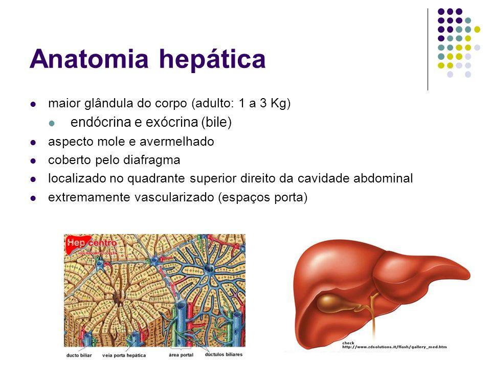 Anatomia hepática endócrina e exócrina (bile)