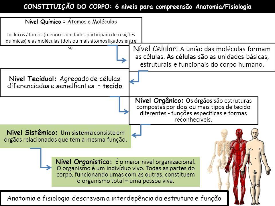 CONSTITUIÇÃO DO CORPO: 6 níveis para compreensão Anatomia/Fisiologia