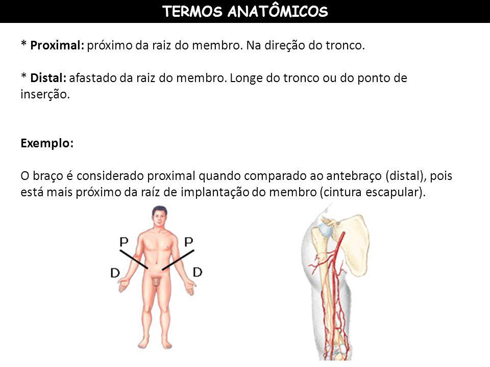 TERMOS ANATÔMICOS