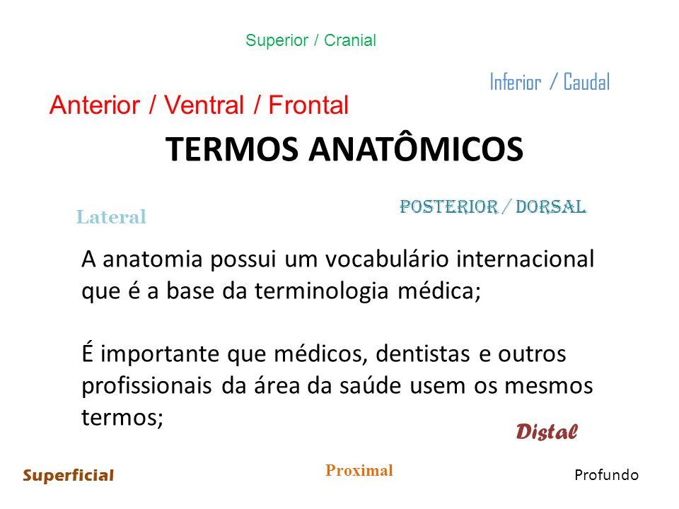 TERMOS ANATÔMICOS Anterior / Ventral / Frontal