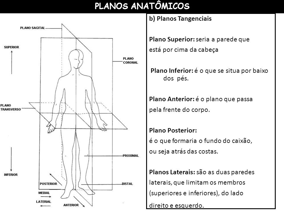 PLANOS ANATÔMICOS b) Planos Tangenciais