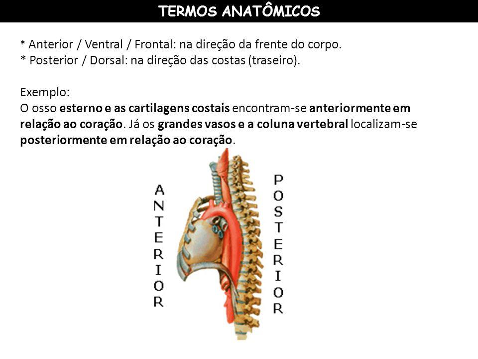 * Posterior / Dorsal: na direção das costas (traseiro). Exemplo: