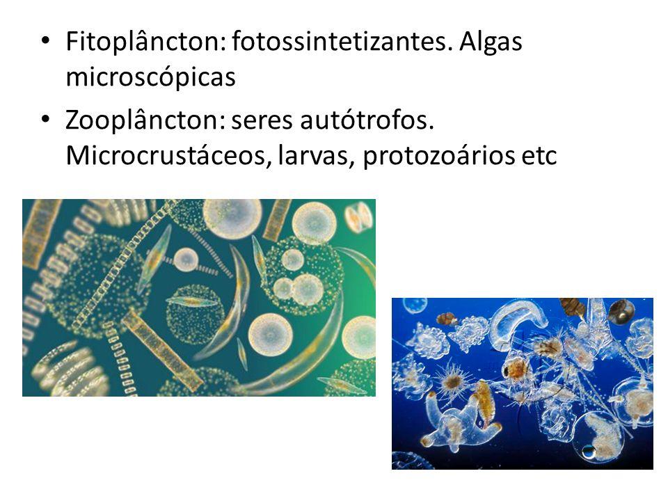 Fitoplâncton: fotossintetizantes. Algas microscópicas