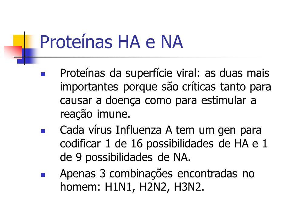 Proteínas HA e NA