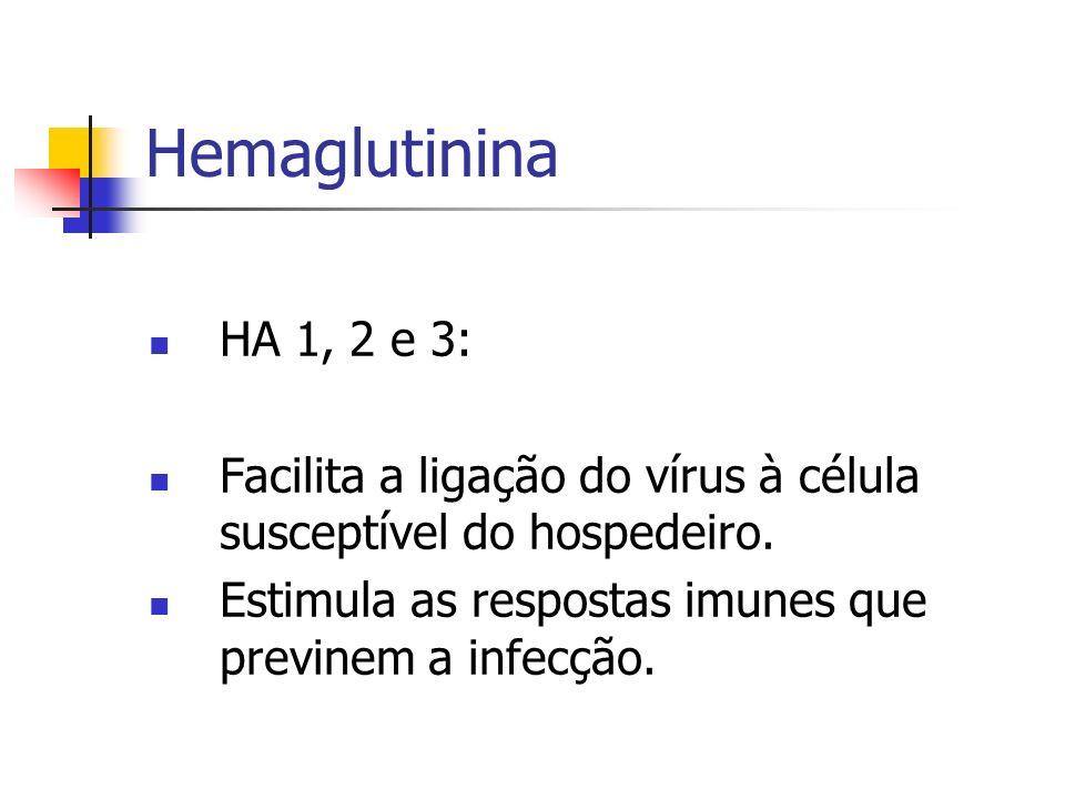 Hemaglutinina HA 1, 2 e 3: Facilita a ligação do vírus à célula susceptível do hospedeiro.