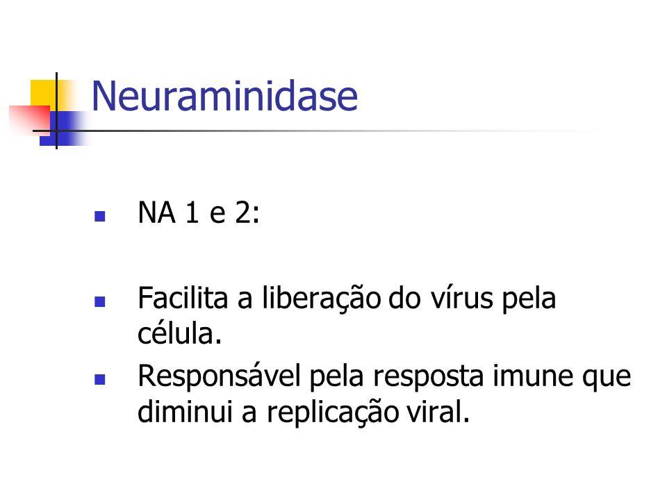 Neuraminidase NA 1 e 2: Facilita a liberação do vírus pela célula.