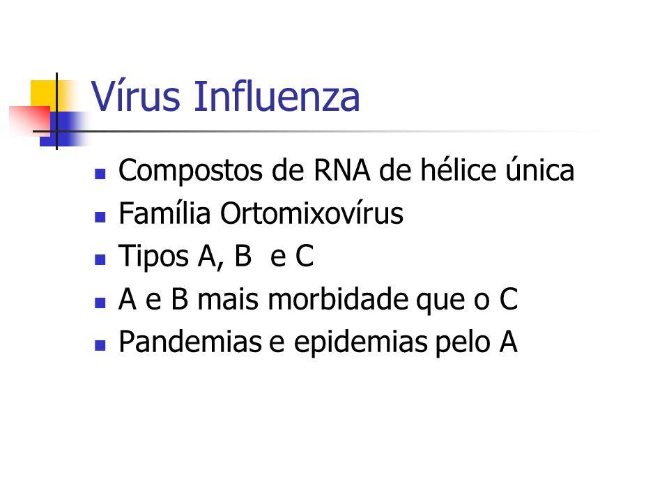 Vírus Influenza Compostos de RNA de hélice única Família Ortomixovírus