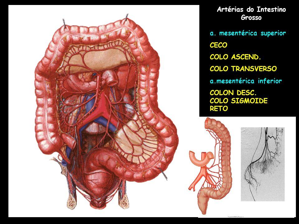 Perfecto Intestinos De Colon Anatomía Patrón - Anatomía de Las ...