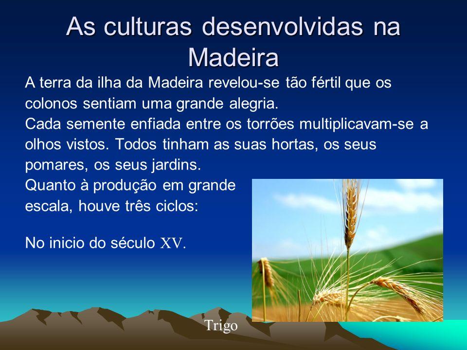 As culturas desenvolvidas na Madeira