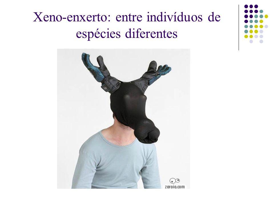 Xeno-enxerto: entre indivíduos de espécies diferentes