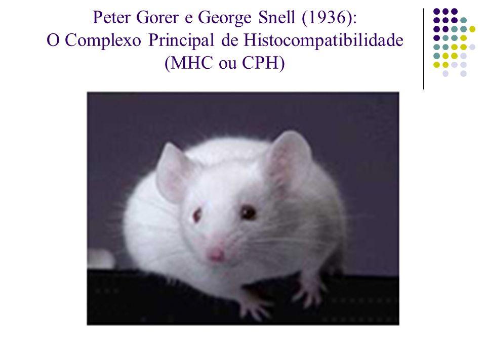 Peter Gorer e George Snell (1936): O Complexo Principal de Histocompatibilidade (MHC ou CPH)