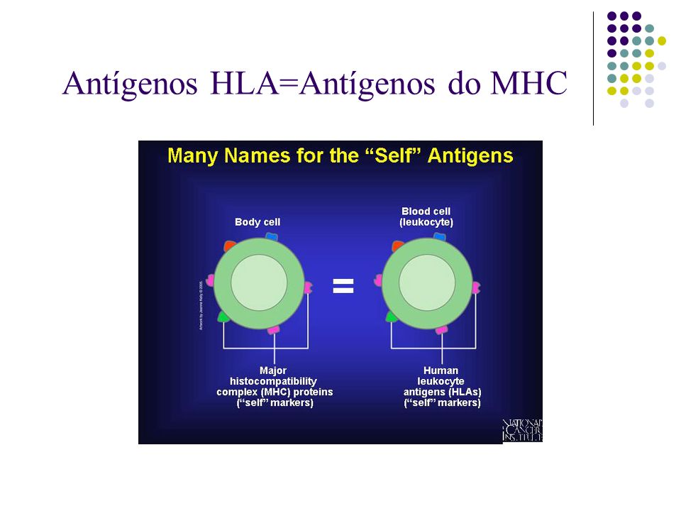 Antígenos HLA=Antígenos do MHC