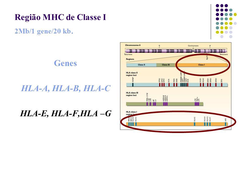 Região MHC de Classe I 2Mb/1 gene/20 kb.