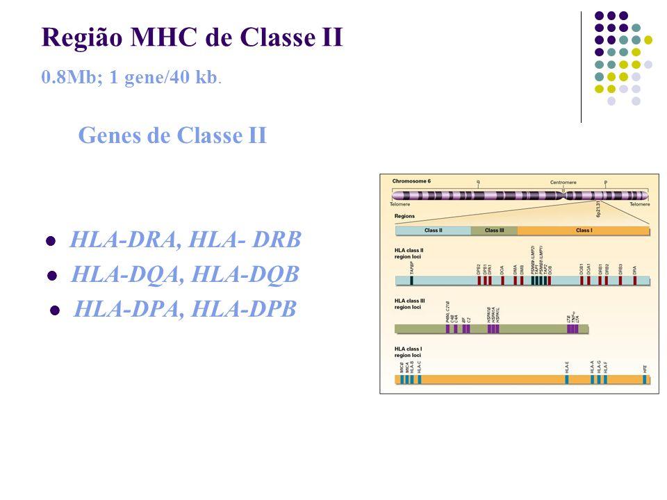 Região MHC de Classe II 0.8Mb; 1 gene/40 kb.