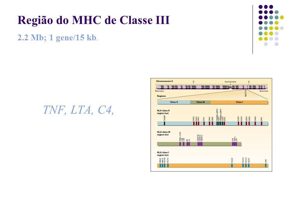 Região do MHC de Classe III 2.2 Mb; 1 gene/15 kb.
