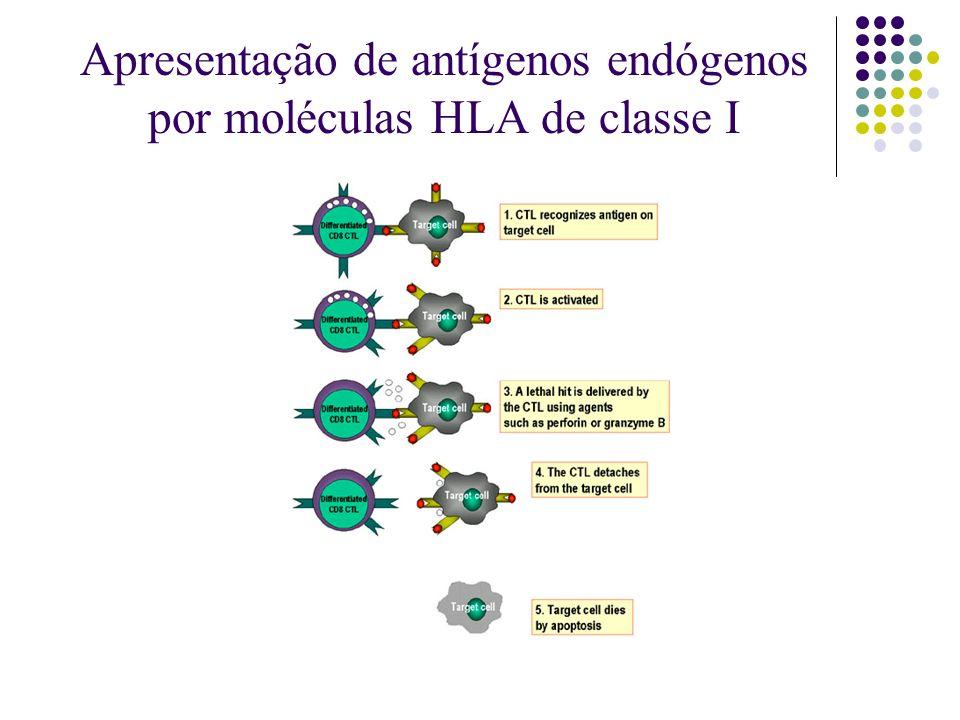 Apresentação de antígenos endógenos por moléculas HLA de classe I