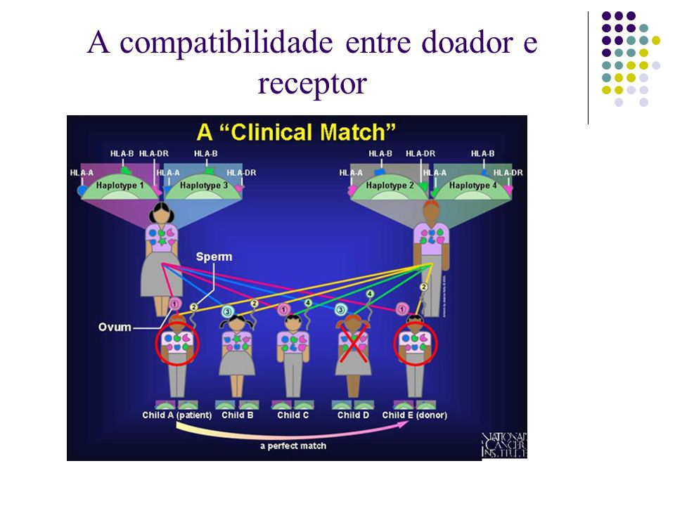 A compatibilidade entre doador e receptor