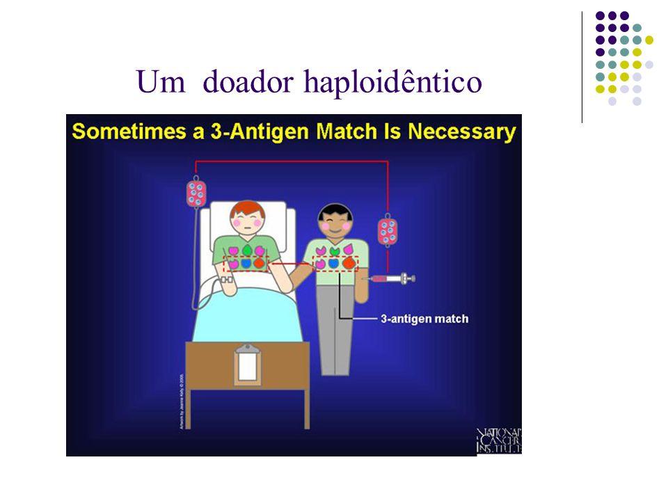 Um doador haploidêntico