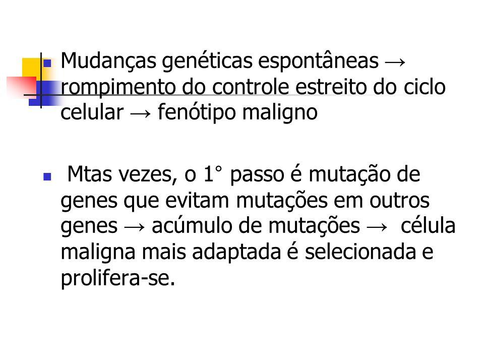Mudanças genéticas espontâneas → rompimento do controle estreito do ciclo celular → fenótipo maligno