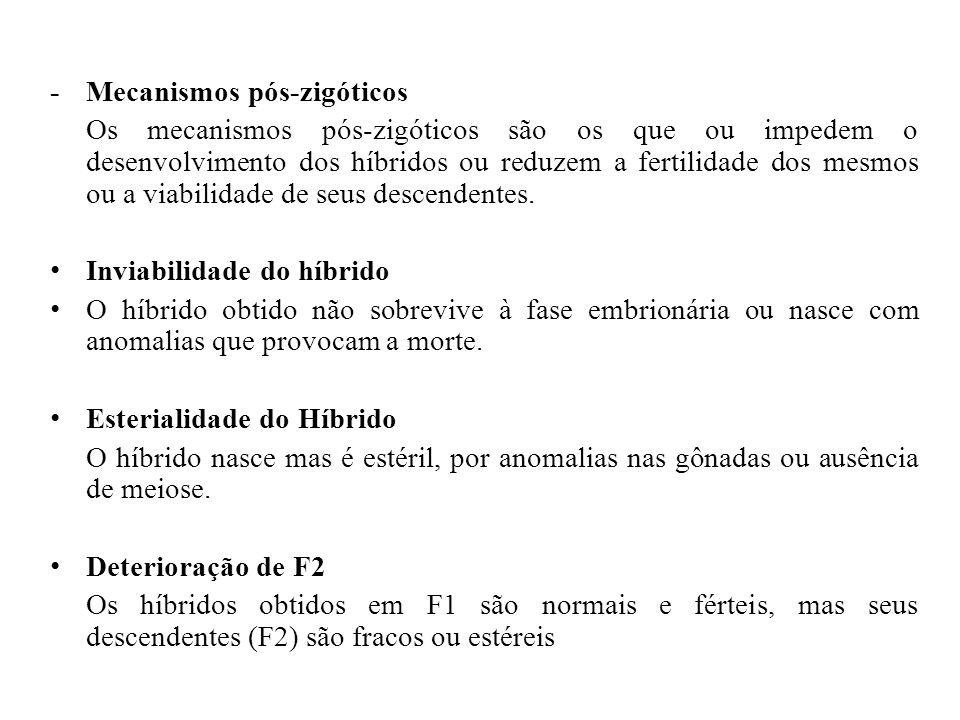 - Mecanismos pós-zigóticos