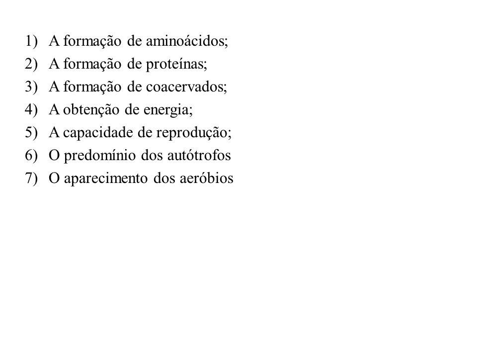 A formação de aminoácidos;