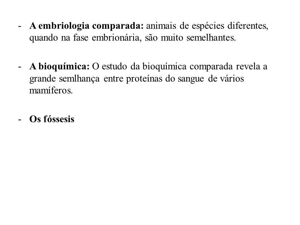 A embriologia comparada: animais de espécies diferentes, quando na fase embrionária, são muito semelhantes.