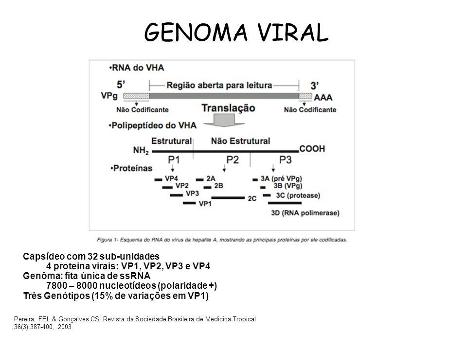 GENOMA VIRAL Capsídeo com 32 sub-unidades