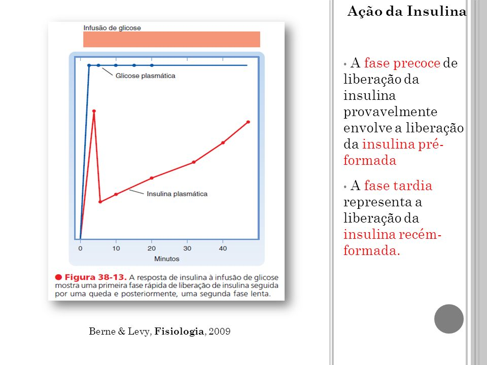 A fase tardia representa a liberação da insulina recém- formada.