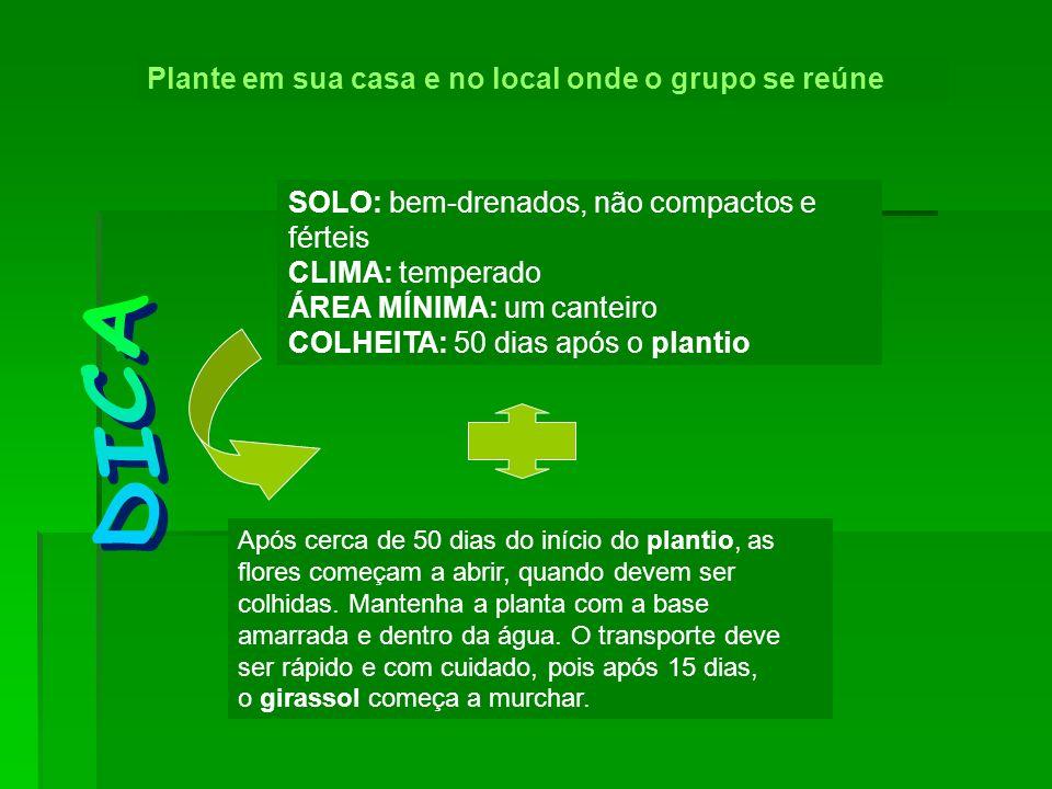 DICA Plante em sua casa e no local onde o grupo se reúne