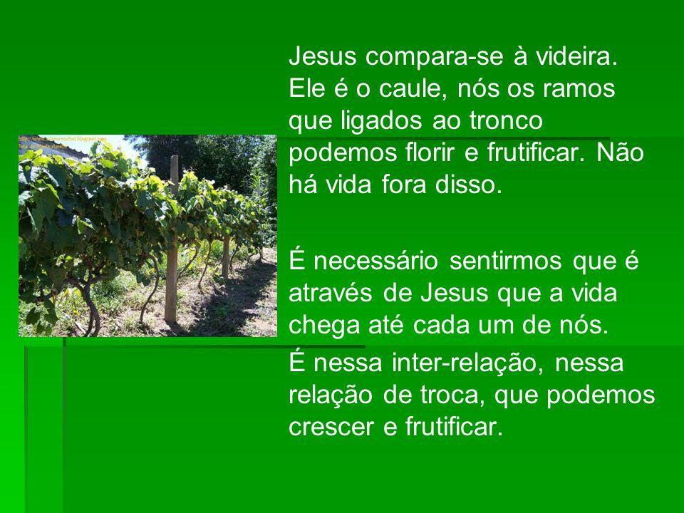 Jesus compara-se à videira