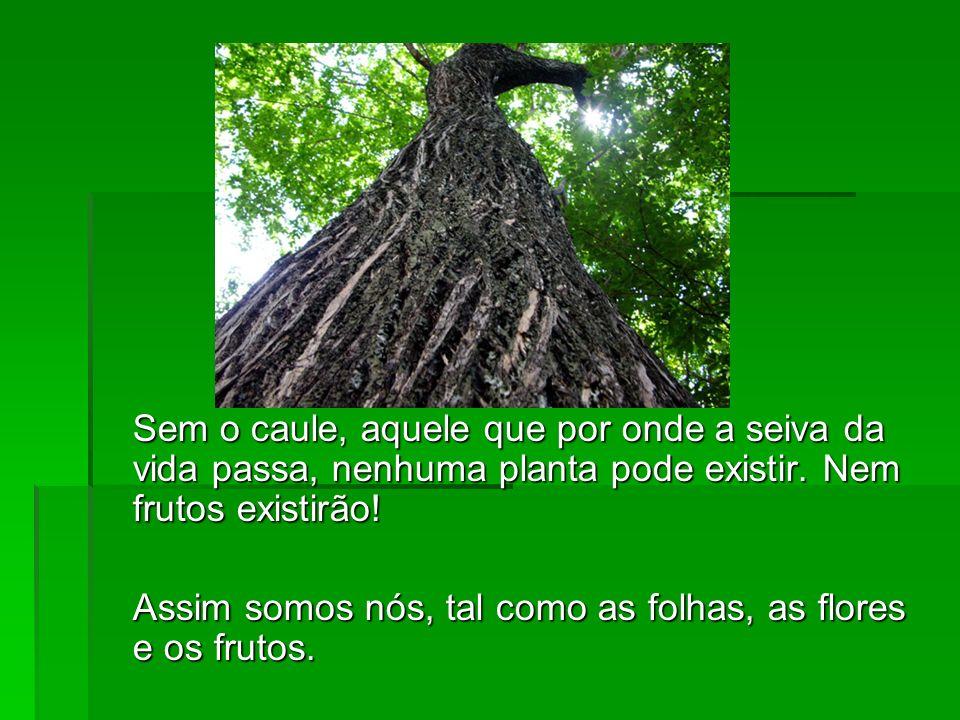 Sem o caule, aquele que por onde a seiva da vida passa, nenhuma planta pode existir. Nem frutos existirão!