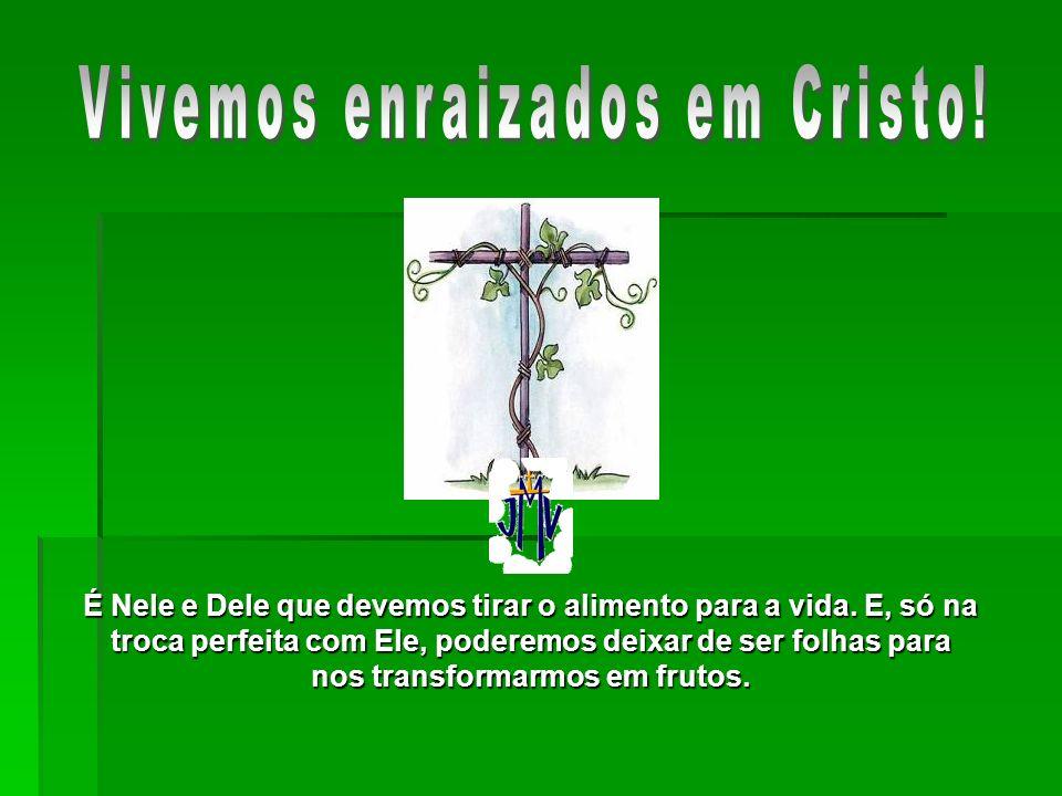 Vivemos enraizados em Cristo!