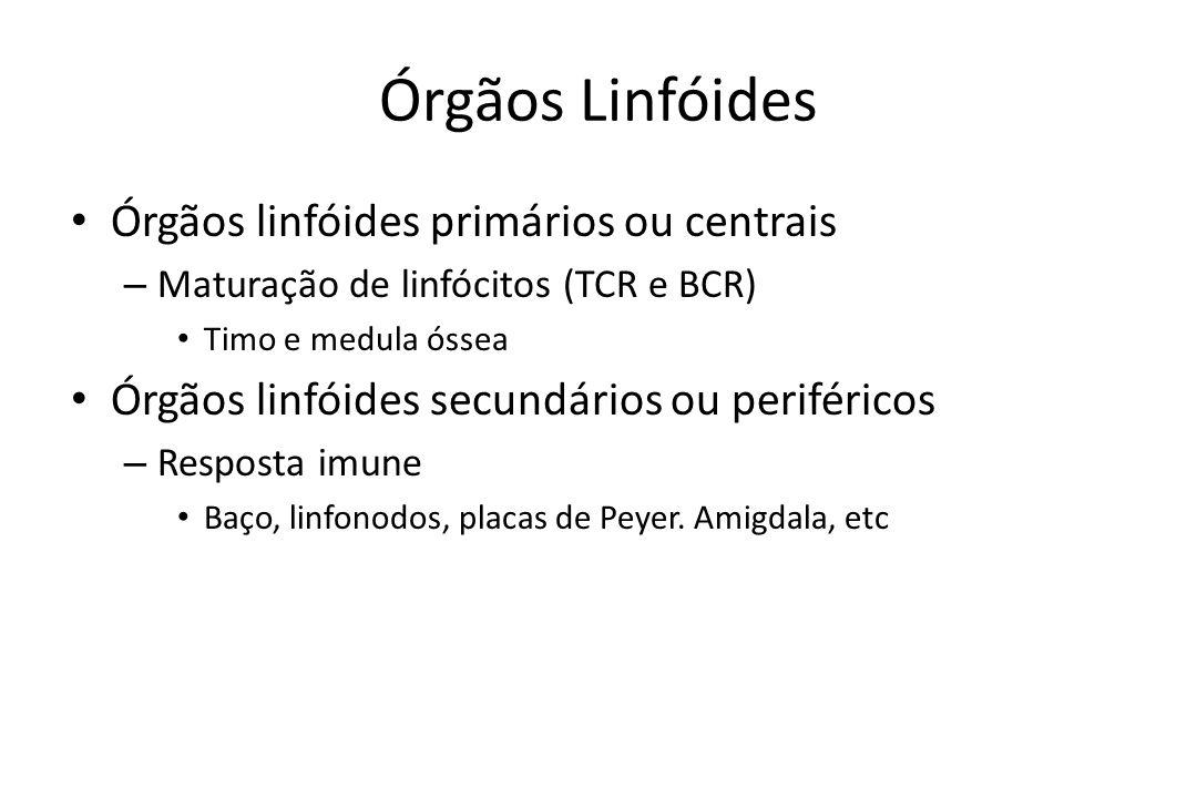 Órgãos Linfóides Órgãos linfóides primários ou centrais