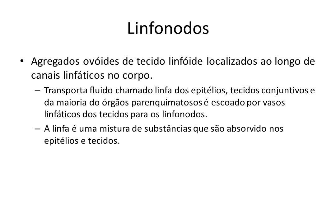 Linfonodos Agregados ovóides de tecido linfóide localizados ao longo de canais linfáticos no corpo.