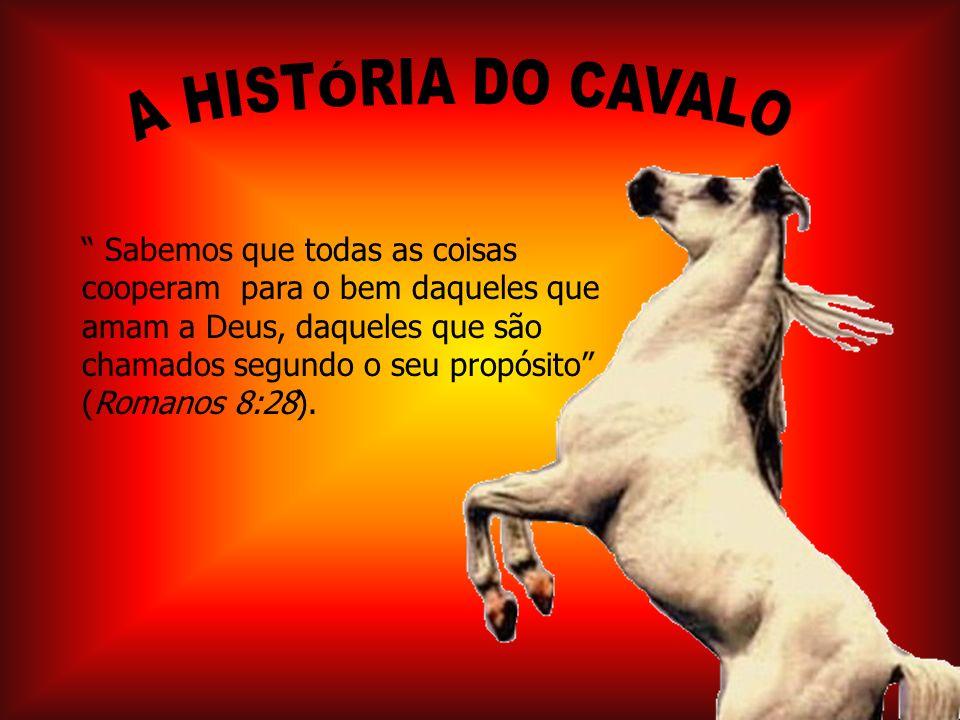 A HISTÓRIA DO CAVALO