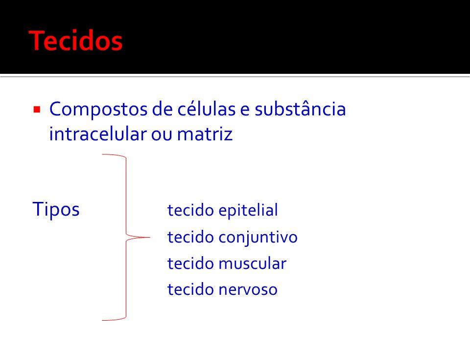 Tecidos Compostos de células e substância intracelular ou matriz