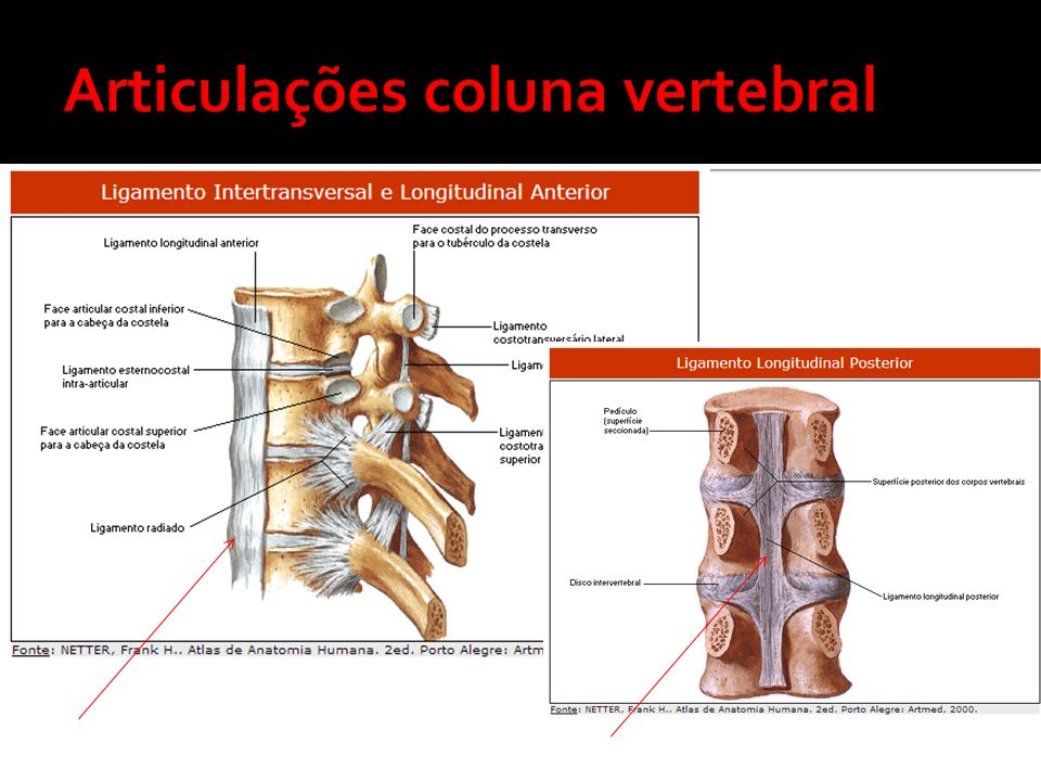 Articulações coluna vertebral
