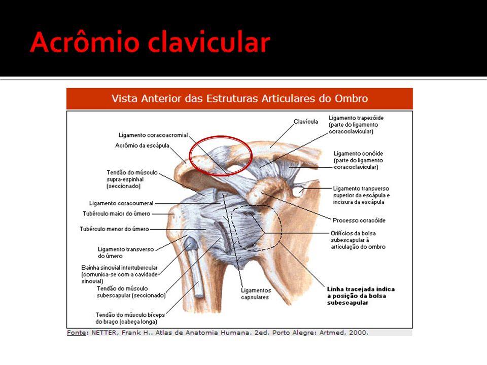 Acrômio clavicular