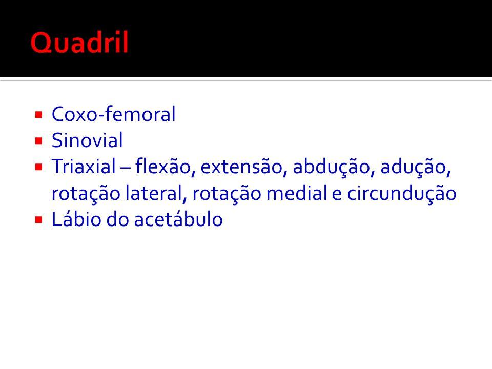 Quadril Coxo-femoral Sinovial