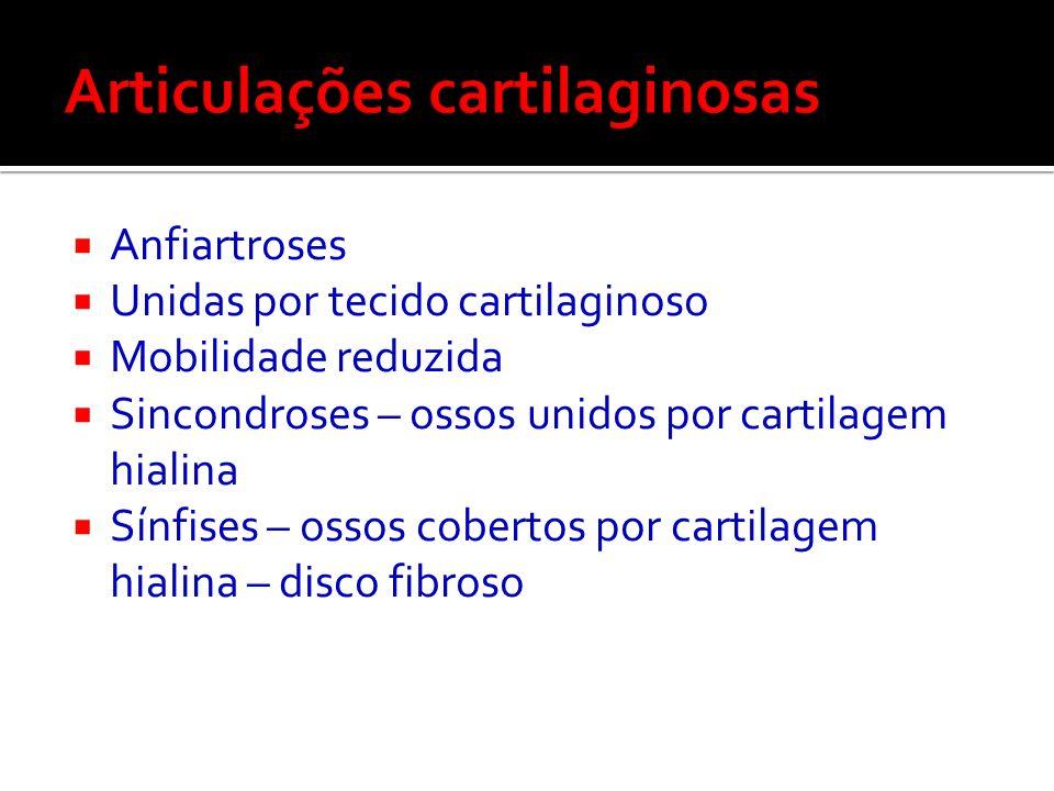 Articulações cartilaginosas
