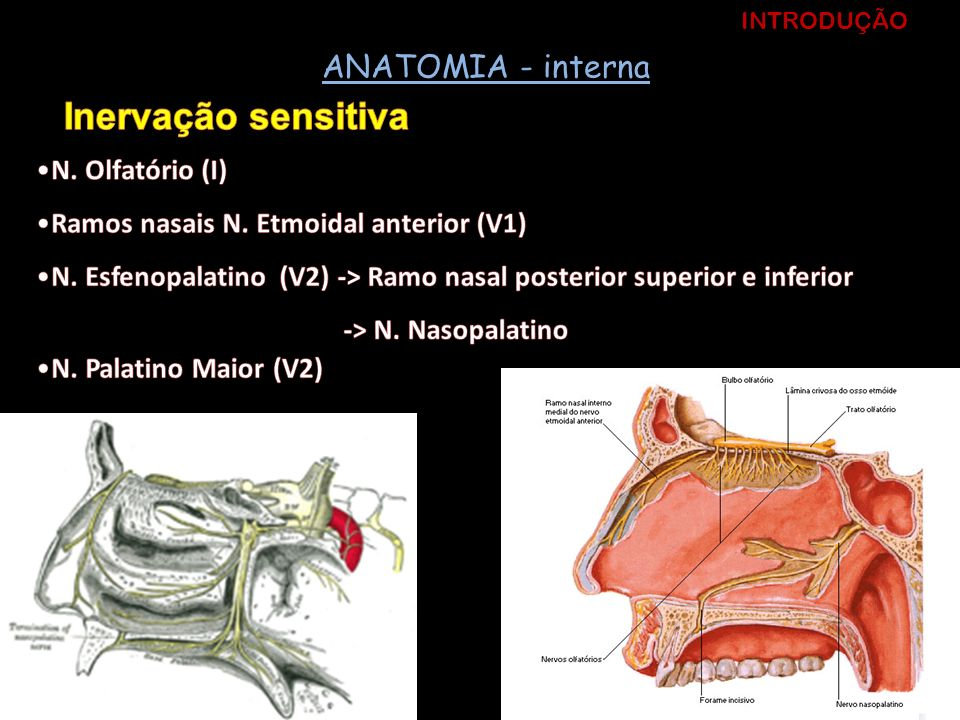 Inervação sensitiva ANATOMIA - interna N. Olfatório (I)