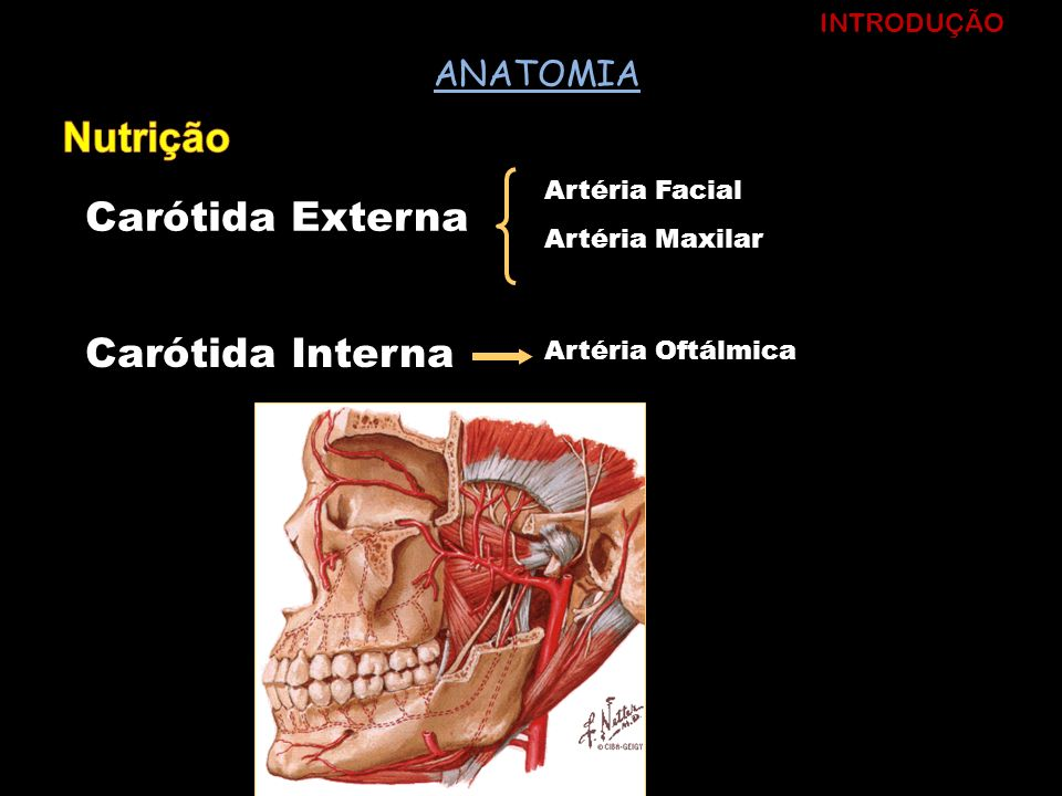 Nutrição ANATOMIA INTRODUÇÃO Artéria Facial Carótida Externa